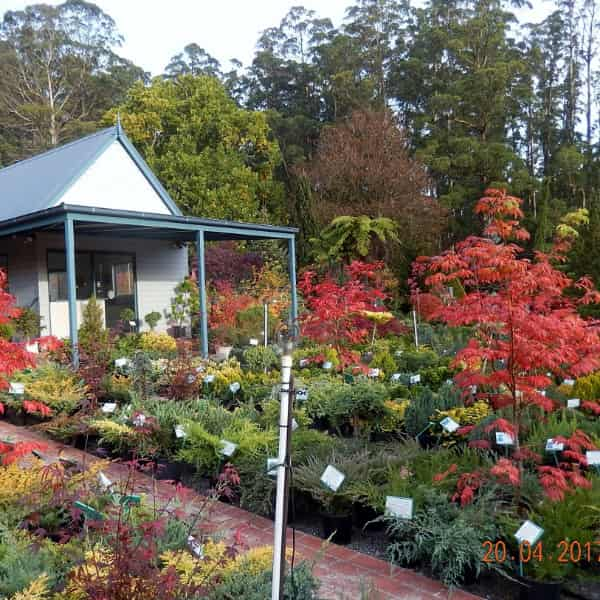 Nursery in autumn